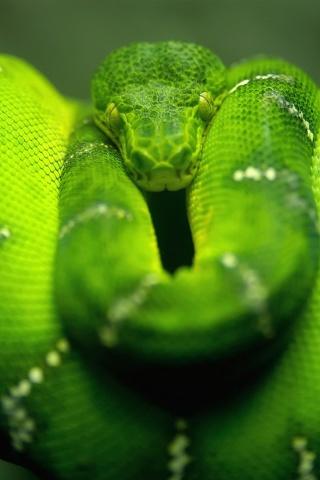 Screenshot №1 pro téma Green Python Snake 320x480