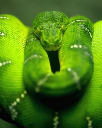 Screenshot №1 pro téma Green Python Snake 352x416