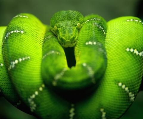 Screenshot №1 pro téma Green Python Snake 480x400