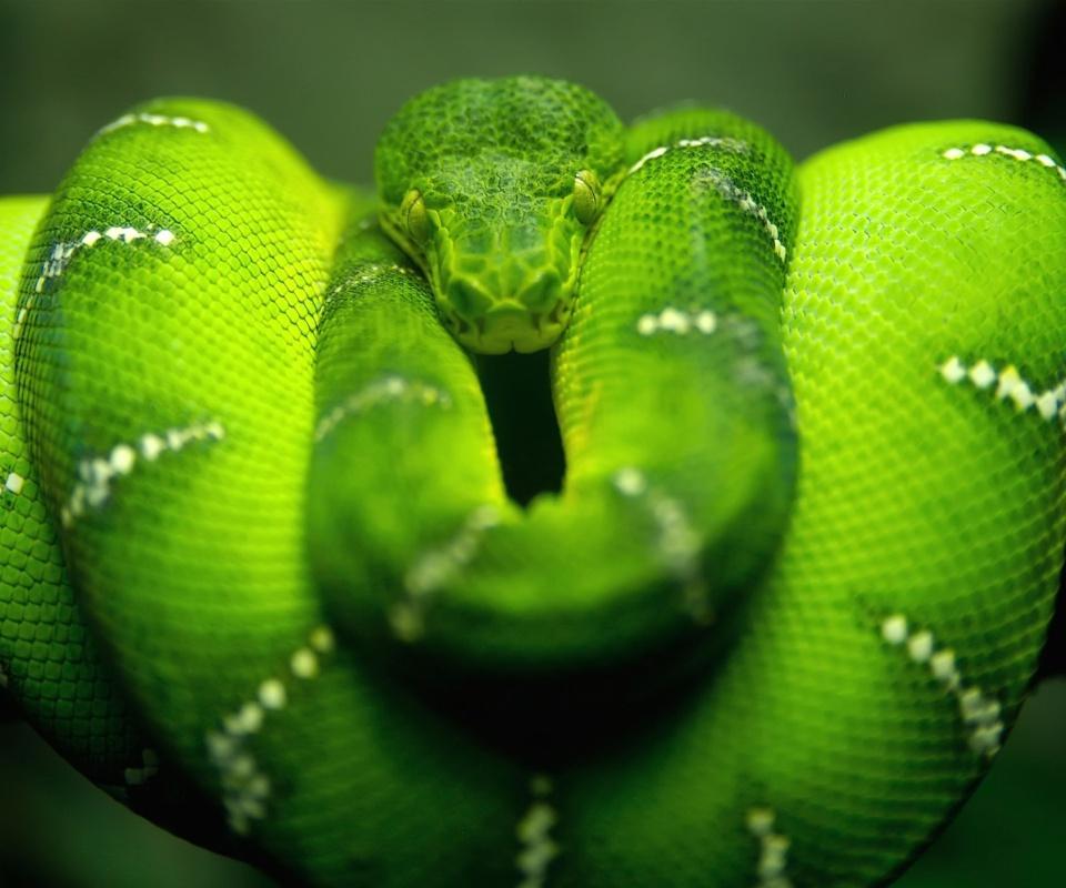 Screenshot №1 pro téma Green Python Snake 960x800