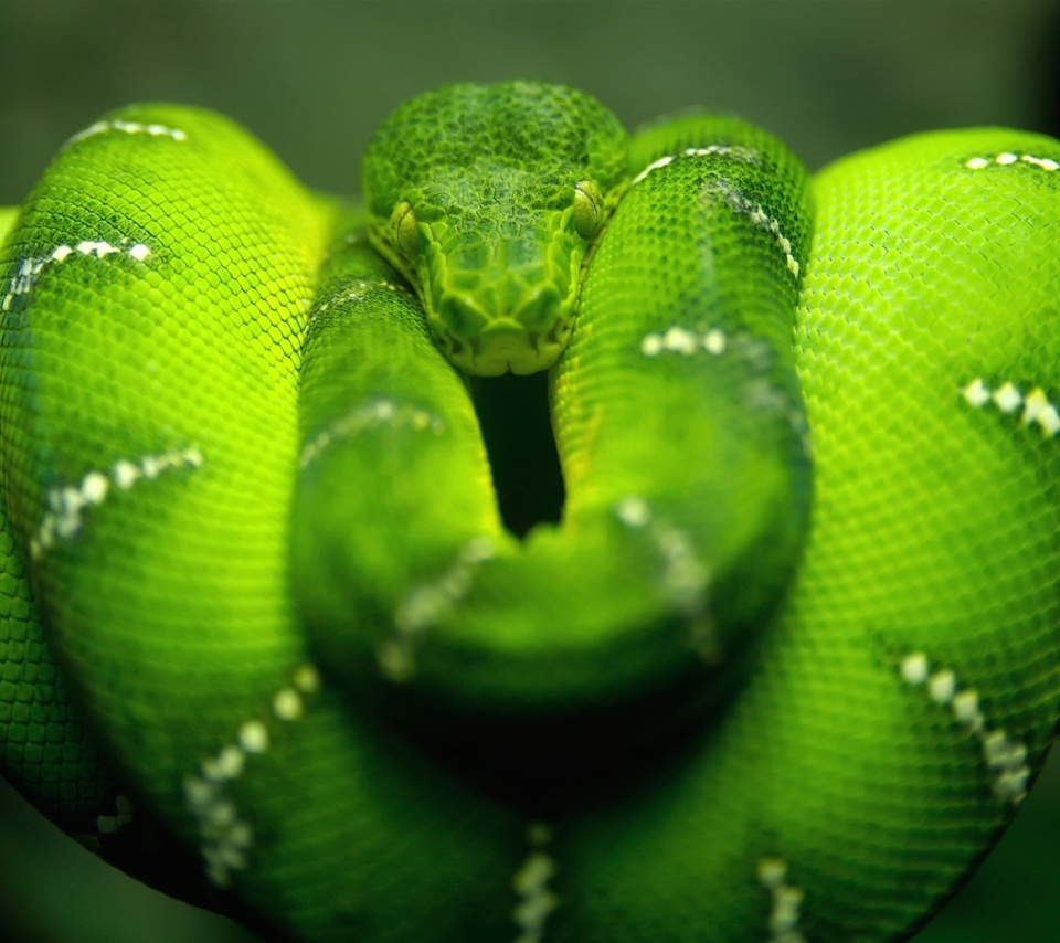 Screenshot №1 pro téma Green Python Snake 960x854