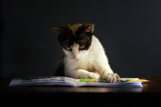 Free Cat Reading A Book Picture for Android, iPhone and iPad