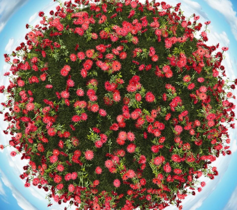 Красивейшие цветы планеты фото