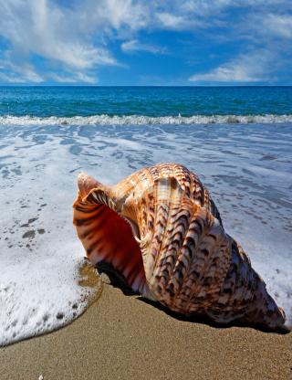 Shell And Beach - Obrázkek zdarma pro iPhone 5C