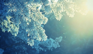 Snowy Pine Background for Android, iPhone and iPad