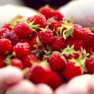 Macro HD Woodland Strawberry - Obrázkek zdarma pro 128x128