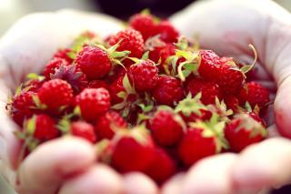 Macro HD Woodland Strawberry - Obrázkek zdarma pro Desktop Netbook 1366x768 HD