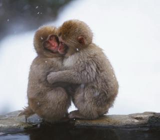 Monkey Love - Obrázkek zdarma pro 208x208