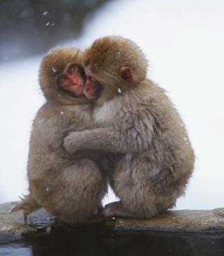 Monkey Love - Obrázkek zdarma pro 480x640