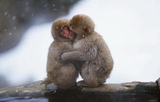 Monkey Love - Obrázkek zdarma pro Samsung Galaxy Q