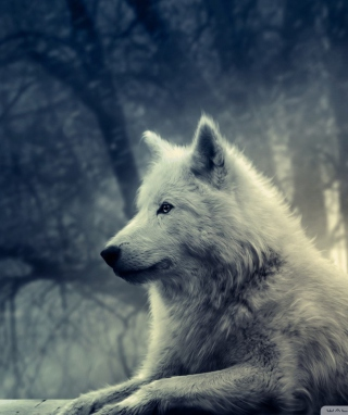 White Wolf Painting - Obrázkek zdarma pro 768x1280