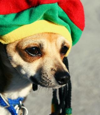 Rasta Dog - Obrázkek zdarma pro Nokia Asha 308