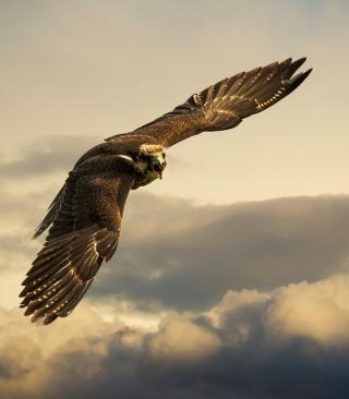 Falcon - Obrázkek zdarma pro 768x1280
