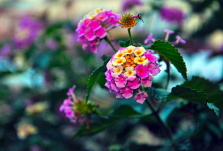 Yellow And Pink Flowers - Fondos de pantalla gratis para Sony Ericsson XPERIA PLAY
