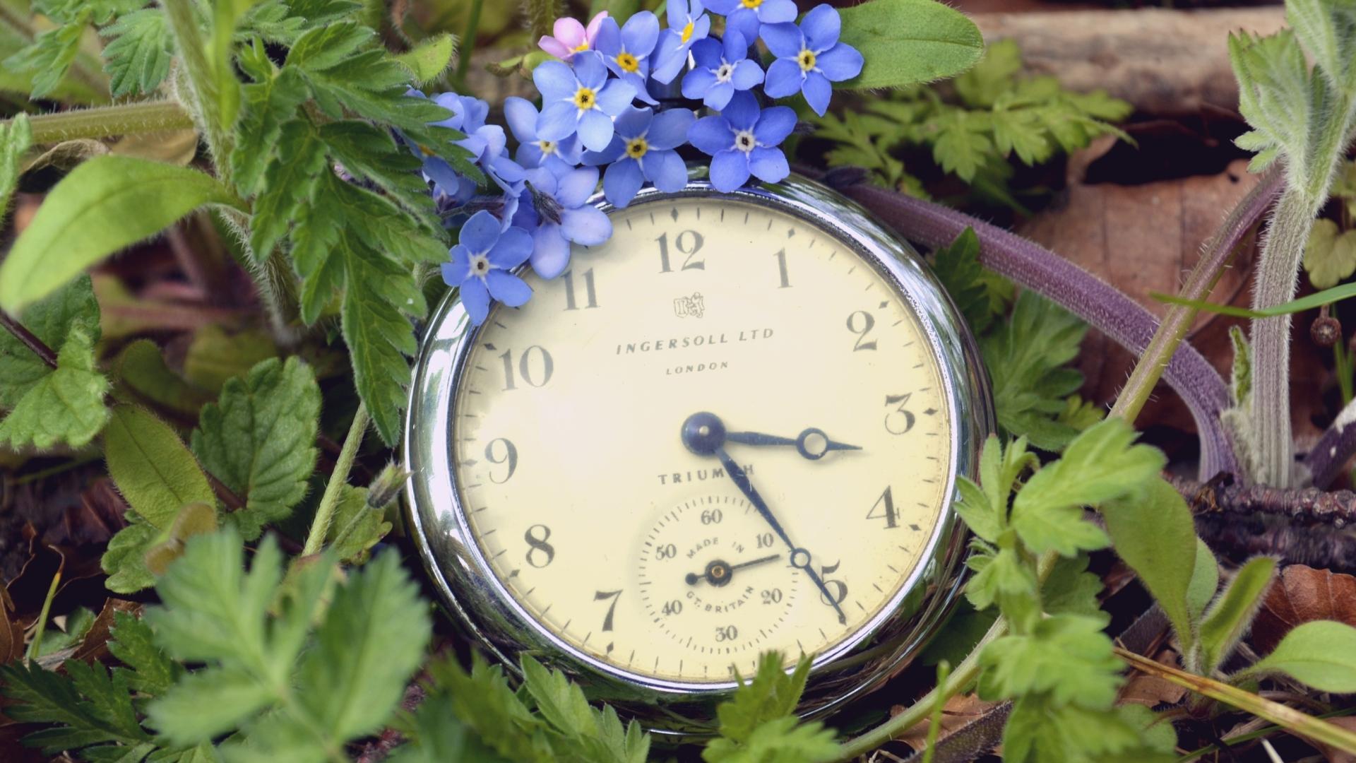 природа цветы часы  № 1520723 загрузить