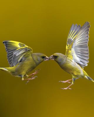 Birds Kissing - Obrázkek zdarma pro Nokia Asha 501