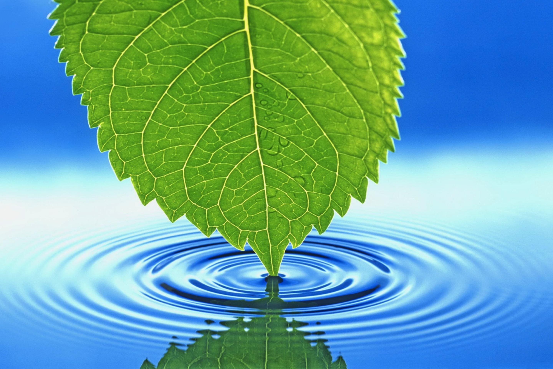 лист вода  № 1505976  скачать