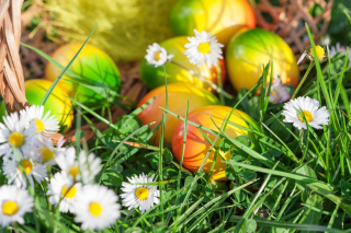 Chamomile and colored eggs Background for Android, iPhone and iPad