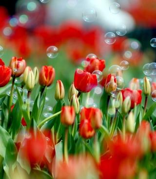 Tulips And Bubbles - Obrázkek zdarma pro Nokia C3-01