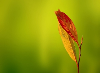 Leaf Wallpaper for Android, iPhone and iPad
