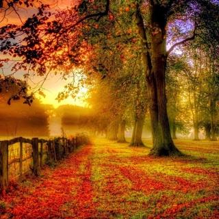 Autumn Morning - Obrázkek zdarma pro iPad mini