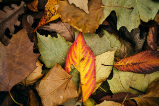 Autumn Leaves Artwork Background for Android, iPhone and iPad