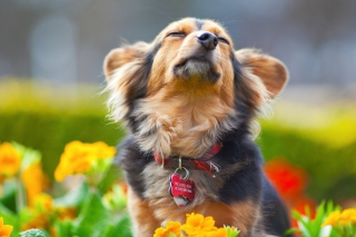 Free Puppy with leash Picture for Android, iPhone and iPad
