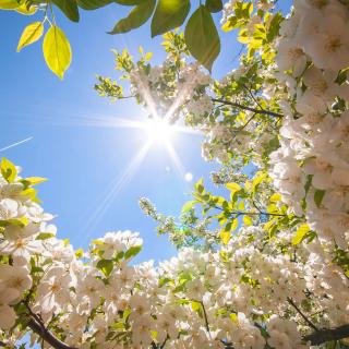 Spring Sunlights - Obrázkek zdarma pro 320x320