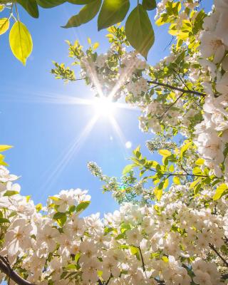 Spring Sunlights - Obrázkek zdarma pro 360x400