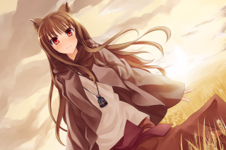 Smile Spice And Wolf Background for Android, iPhone and iPad