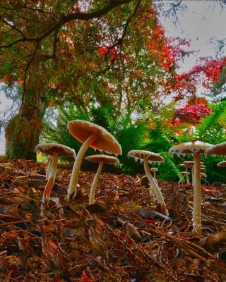 Wild Mushrooms - Obrázkek zdarma pro 320x480