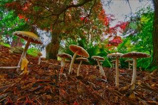 Wild Mushrooms - Obrázkek zdarma pro 1920x1200