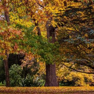 Australian National Botanic Gardens - Obrázkek zdarma pro iPad Air