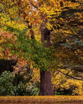 Australian National Botanic Gardens - Obrázkek zdarma pro 132x176