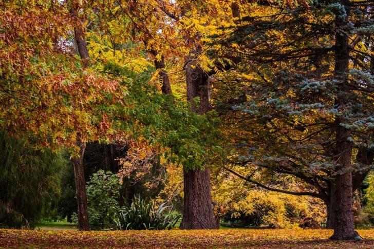 Australian National Botanic Gardens wallpaper