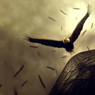 Eagle Flight - Obrázkek zdarma pro 128x128