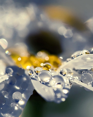 Raindrops HD Macro - Obrázkek zdarma pro 640x960