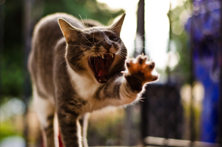 Funny Yawning Background for Android, iPhone and iPad