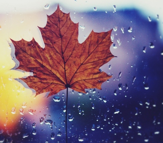 Dried Maple Leaf - Obrázkek zdarma pro iPad Air