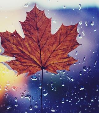 Dried Maple Leaf - Obrázkek zdarma pro 240x432