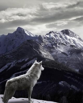 Wolf in Mountain - Obrázkek zdarma pro 240x400