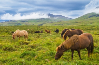 Meadow In Ireland Background for Android, iPhone and iPad