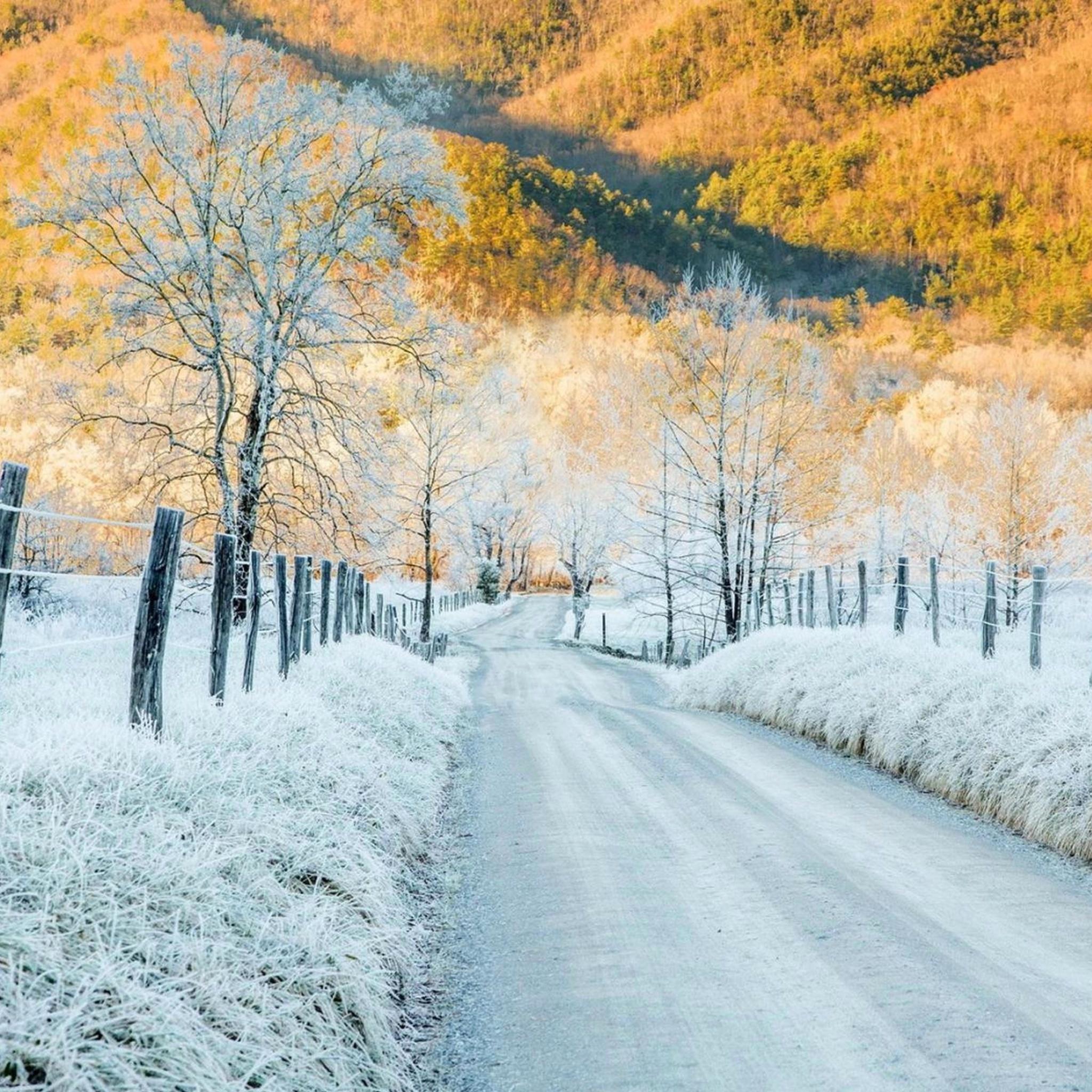 снег деревья желтые  № 442333  скачать