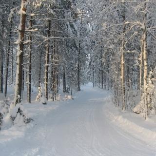 Winter snowy forest - Obrázkek zdarma pro 320x320