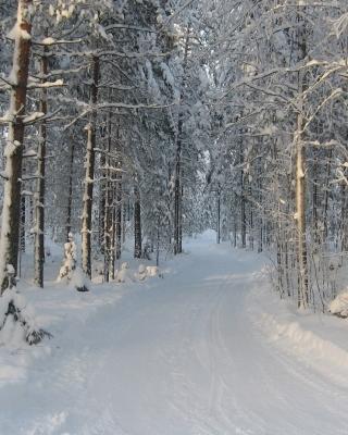 Winter snowy forest - Obrázkek zdarma pro Nokia X6