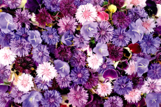 Flower carpet from cornflowers, bluebells, violets Wallpaper for Android, iPhone and iPad