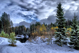 Winter in taiga forest Background for Android, iPhone and iPad