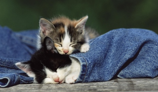 Cute Cats And Jeans Picture for Android, iPhone and iPad