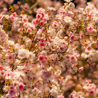 Spring flowering macro - Obrázkek zdarma pro iPad 3