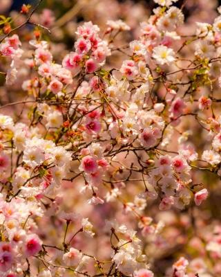Spring flowering macro - Obrázkek zdarma pro Nokia Asha 308
